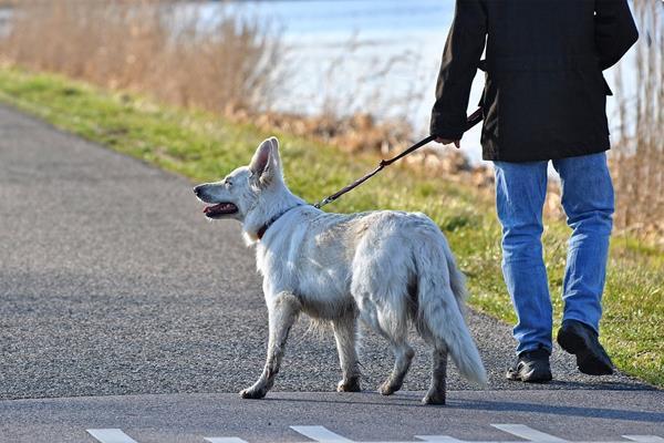 Pierwsze spacery z psem - jak często i jak długo spacerować
