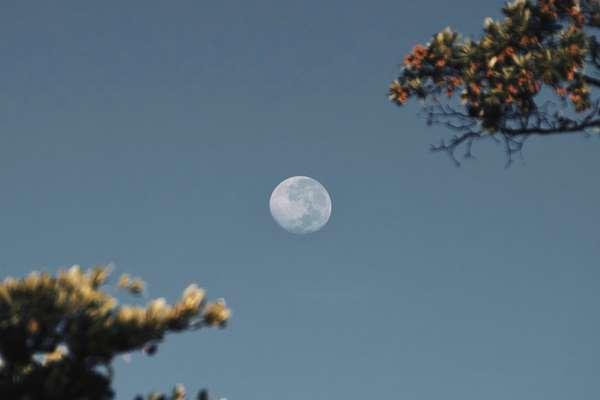 Kalendarz rolniczy a fazy Księżyca. Jak Księżyc wpływa na rośliny?